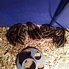 5-quail-babies